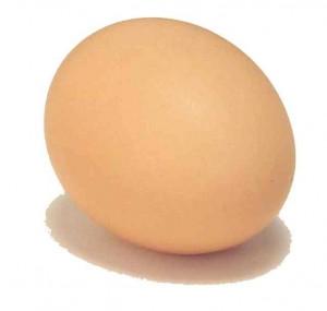 ביצה מקורית
